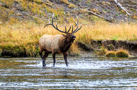 Yellowstone Wildlife 2015